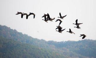 追逐候鸟的足迹,感受候鸟的栖息之美