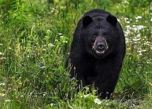 一只熊掉进20m深的洞穴里,请问,这只熊是什么颜色的