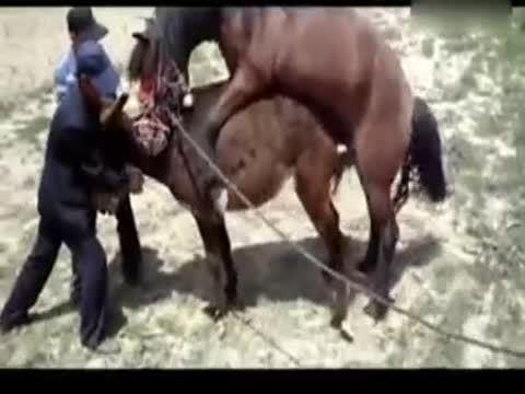 动物世界性行为大全之马配驴视频