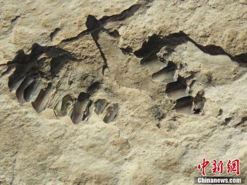 沙特遗产委员会:发现距今12万年前的人类脚印