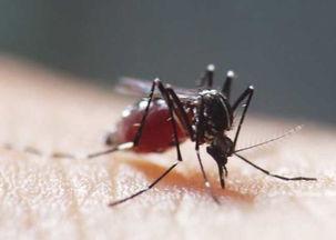 蚊子的防治方法有哪些