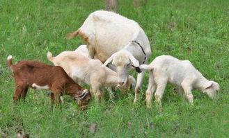 18羊人每月运程