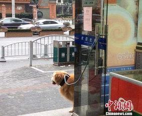 多地出台养犬规定限定品种、一户一犬等3月1日,一则山东济南推出养犬积分制的消息引发热议。