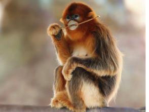 中国最珍贵的动物有哪些