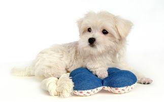 狗狗皮肤病会传染人吗 狗狗有哪些疾病会传染给人