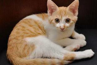 超可爱的小猫咪是
