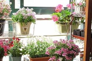 高层阳台适合养花吗