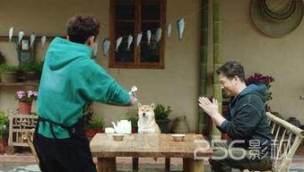 向往的生活第二季4月20日播出何炅做菜欲接手黄磊