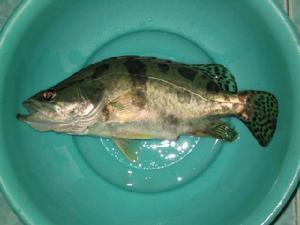 什么鱼最贵(什么鱼最贵是吃得的)