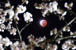 中秋将迎30多年不遇奇观 超级红月巧遇月全食
