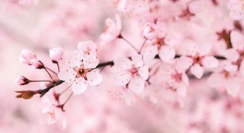 关于写春的诗句