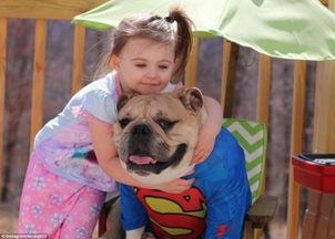 美国两岁女孩与斗牛犬形影不离成好友美国两岁女孩与斗牛犬形影不离成好友美国一位两岁的小女孩与家中的斗牛犬成为了形影不离的好朋友.