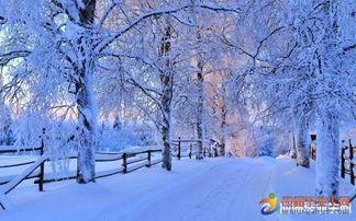 古诗中关于雪的诗句