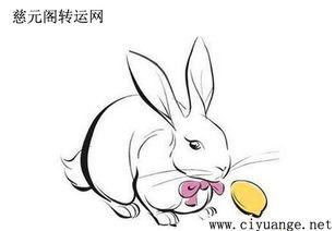 猪属兔农历每月运程