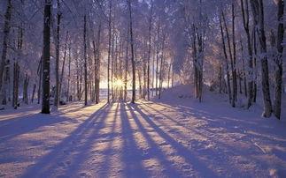 冬季风景唯美伤感图片 心很酸 烟很淡