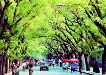 关于绿树成荫的古诗词