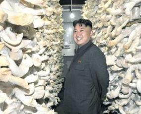 金正恩2013年公开活动 遍布朝鲜社会各角落