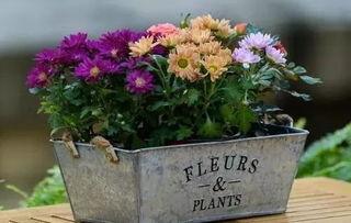 铂金会养花吗