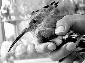 李闻看见一只小鸟受伤了什么补充句子