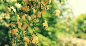 用拟人句描写春天的景色句子_描写春天景色的一句话拟人