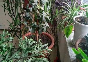 热天室内养花