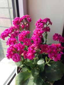 室内养花都放散光处吗