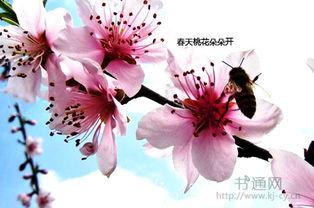 描写春天的花的段落排比句_描写春天花的段落