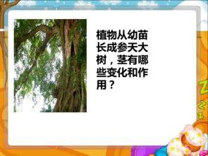 我们中国的树有哪些变化