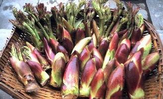 农村常见的野味山珍,误认为是 香椿 ,但味道比香椿好吃多了