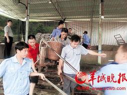 猪老板用加压机给猪灌料增重 部分猪肚胀惨死 社会万象