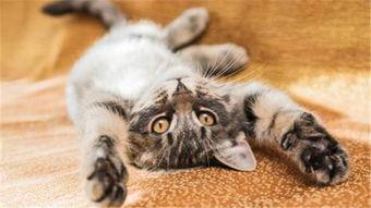 给猫咪剪指甲剪的太短了怎么办