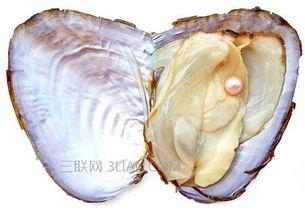 河蚌的内脏怎么处理哪些部位不能吃