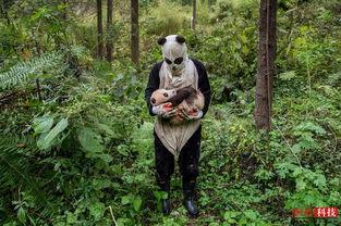 2017年野生动物摄影大赛最佳作品集锦