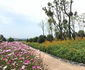 春天公园里花的景色_春天到了花园里的景色