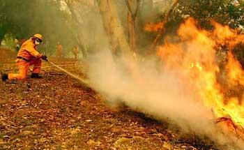 关于澳大利亚火灾的作文素材