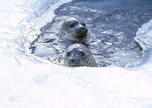 极地海洋生物动物世界海狮海豹摄影