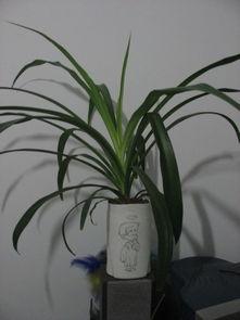 适合放在套房内的水养花有哪些