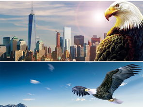 大气雄鹰翱翔蓝天展翅高飞企业文化背景图片设计素材 高清模板下载 38.17MB 其他大全