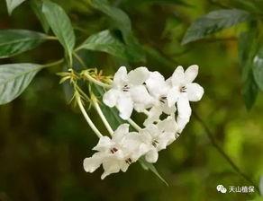 花冠有多少种都有哪些代表植物