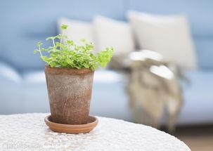 室内养花会滋生细菌吗