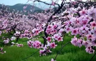 有关桃花林的诗词