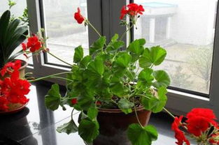 个人宿舍里养花