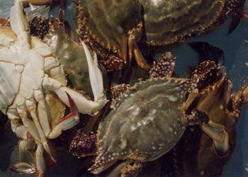 肉蟹的营养价值 肉蟹的做法 食用肉蟹的注意事项 肉蟹的养殖技术 家居百科