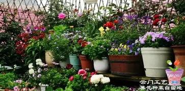 阳台养花排水怎么做