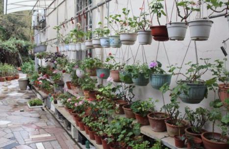 茶叶在养花中的功效与作用