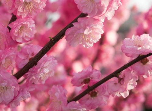 描写春天的好古诗名句