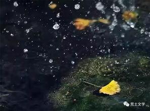 关于白杨树的诗句和歌词