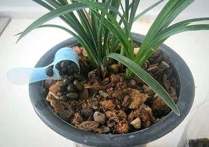 木頭渣可以做養花土嗎