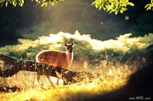 鹿的图片 最唯美的动物图片
