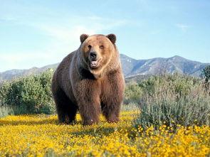 和熊有关的谚语